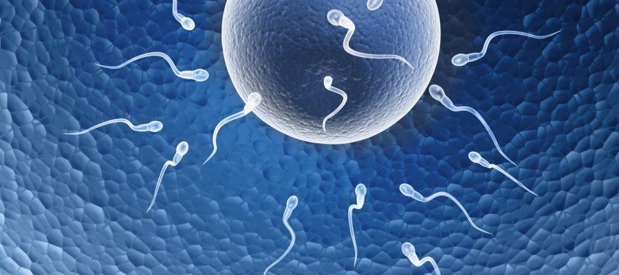 challenge-fertility-options